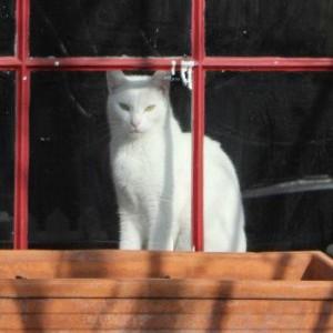 cat 350